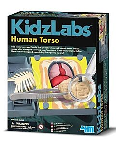 4M Kidz Labs | Human Torso Anatomy - 15% OFF!!
